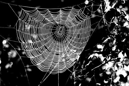 Rete fissa.. by Claudio61 una foto ferma un ricordo nel tempo