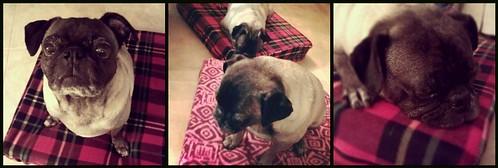 Pug beds