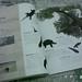 ワンダと巨像 - 公式ガイドブック ~ Shadow of the Colossus – Official Guide Book