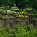 Kasuga Taisha Shrine, Nara, Japan by Wistou