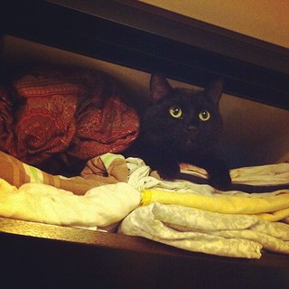 Proper storage of cats! #cat #cats #pet #instapet #shotoftheday #black #yellow #home