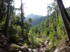 Le vieux chemin en RD en aval de la brèche du Carciara : arrivée au Pino Negro
