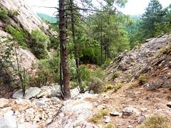 Fin de remontée du bas-Velacu : sortie de la végétation en arrivant au départ de la partie raide du ravin