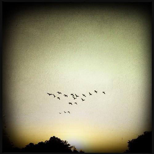 sun bird birds sunrise virginia pájaros williamsburg pájaro iphone pajaritos iphoneography hipstamatic iphonografía