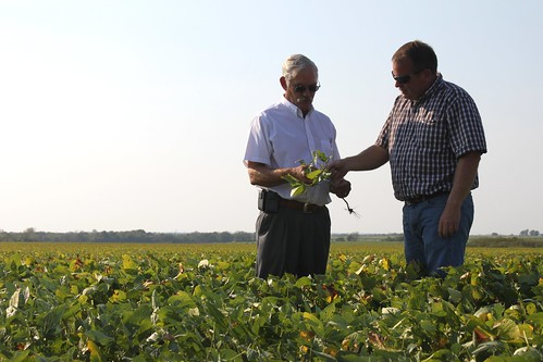 USDA Undersecretary Michael Scuse and Cass County FSA committeeman and farmer Trent Smith discuss the drought's impact on this year's soybean crop. Smith's farm was one stop on the Undersecretary's tour assessing Missouri's drought.