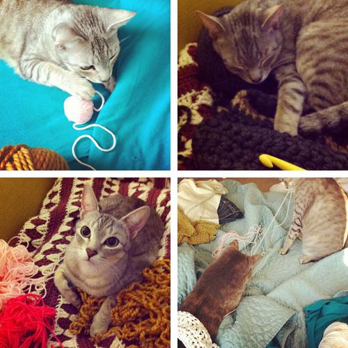 Crochet_Kittens
