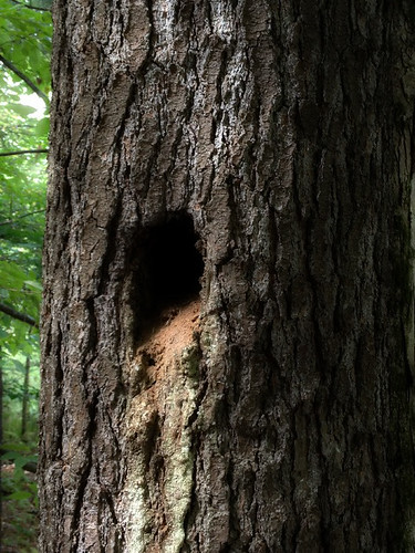 Woodpecker Hole