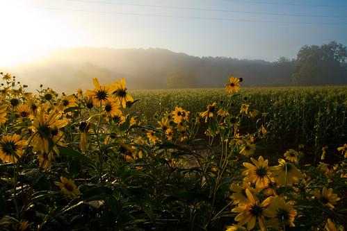 Wildflower Study #1