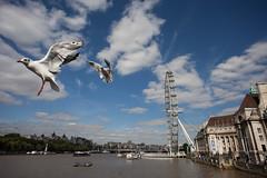 Segulls and the London Eye | 120917-0997-jikatu