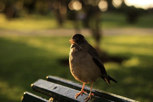 """""""Pájaro gordo"""""""