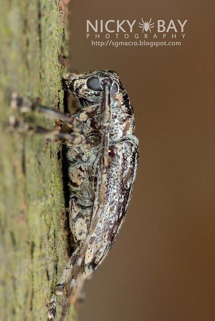 Longhorn Beetle (Cerambycidae) - DSC_0839