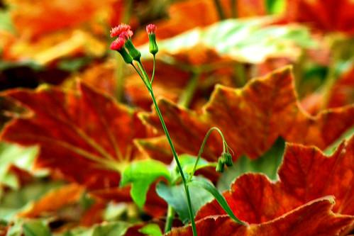 micro-flor folhas e sonhos by Fred Matos
