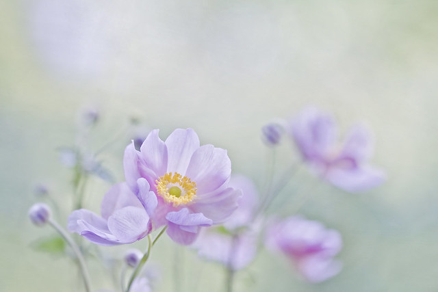 Beauty of Flowers - Nature Treat
