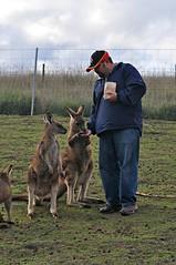 dog(0.0), deer(0.0), pet(0.0), wildlife(0.0), animal(1.0), marsupial(1.0), mammal(1.0), kangaroo(1.0),