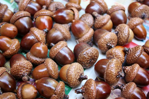 how to dry acorns for fall crafts life at cloverhill