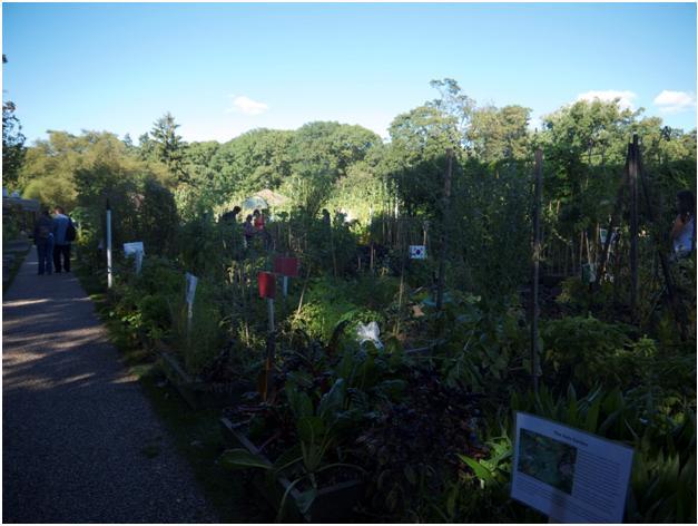 edible gardens 4