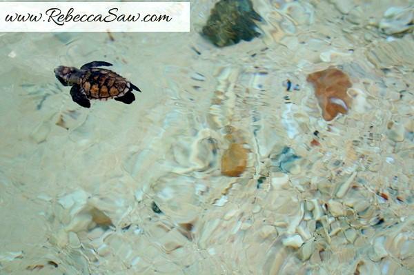 Redang Marine Park - malaysia tourism hunt 2012-004