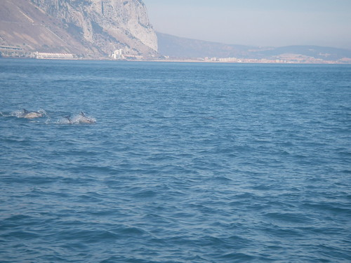 Dolphins & the Rock