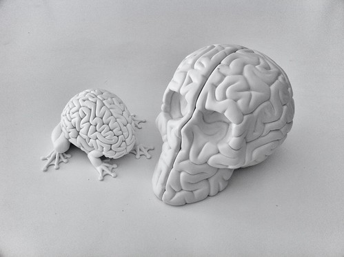 "5"" Jumping Brain vs Skull Brain by ""lapolab"""