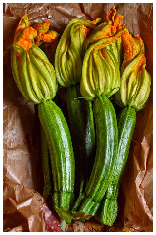zucchini© by Haalo