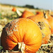 Rock Creek Growers' Pumpkin Festival - Kimberly, Idaho - 2012