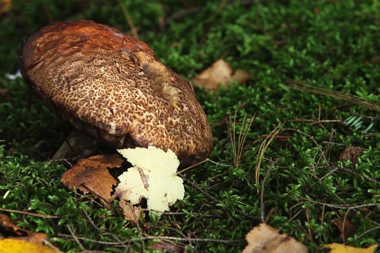 web_mushroom_foliage_0095