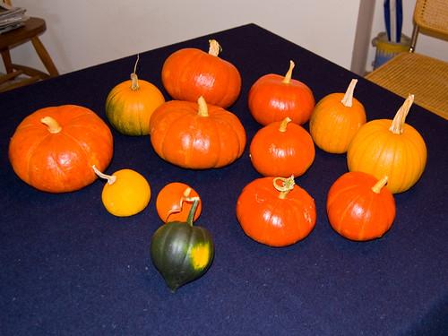 2012 Pumpkin Harvest