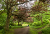 D13 - A walk in Lews Castle park in Stornoway