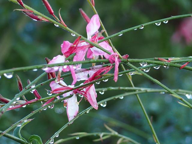 Raindrops Galore