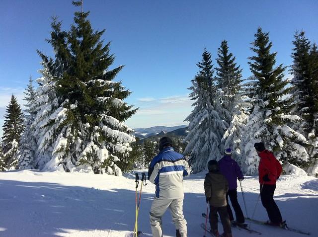 ski, pine trees