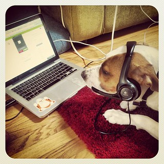 Need a Thursday pick me up? Check out Buster @AviWarner's pup pretending he's a #Zendesk agent!