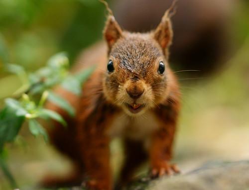 [フリー画像素材] 動物 1, 栗鼠・リス ID:201209131000