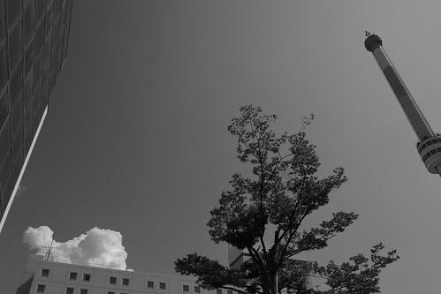 niigata monochrome 41