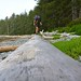 Rick walking beached log en route to Nissen Bight - Cape Scott Trail, BC