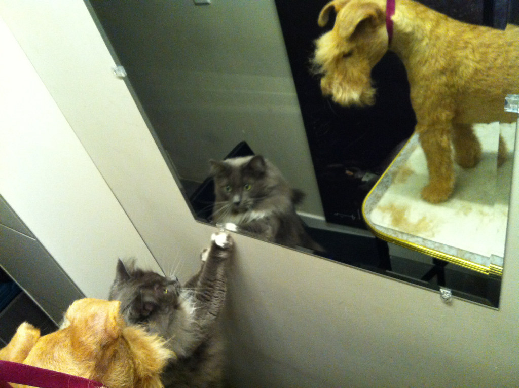 """""""Hey... are there two cats here?!"""""""