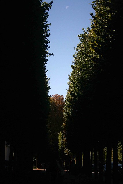 Photo Essay –Trees of Paris, Around Town