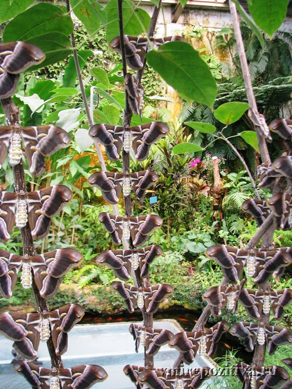 Тенерифе: Центр тропических бабочек