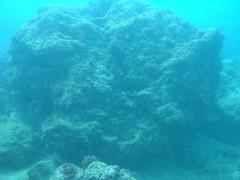 「天秤颱風」過後殘破的微孔珊瑚(陳昭倫提供)