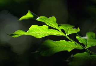 Light leaves into darkness