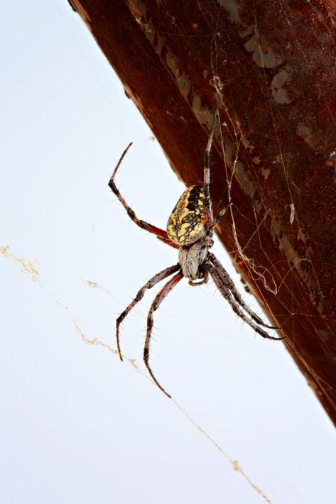 090112_06_bug_spider278
