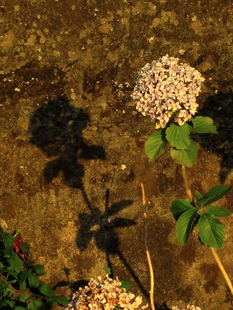 Flor y su sombra
