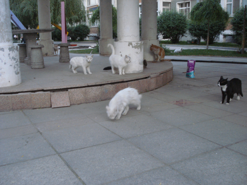 Cats in Shenyang, China _ 0143