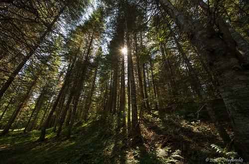 wood sun canada forest soleil woods quebec québec forêt bois bassaintlaurent valléedelamatapédia causapscal lamatapédia