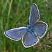 Escher's Blue (John Willsher)