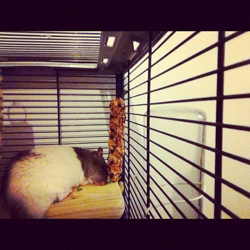 Klaus-y Mousey