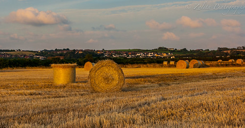 Sunset on the hay by xxx zos xxx