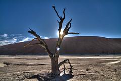 Namib Desert/Sossusvlei