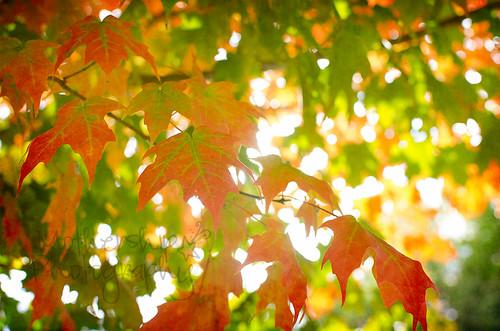 秋天的树叶
