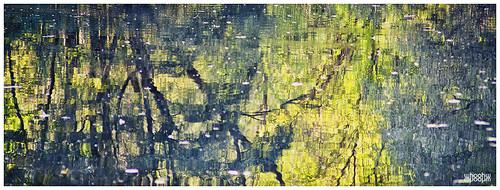light lake abstract reflection tree wasser autum sony herbst spiegelung steiermark styria watter whoohw voigtländercolorheliarmc75mmf25
