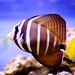 Fish by Erwin_L